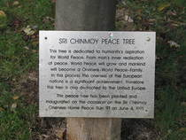 Sri Chinmoy Peace tree